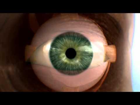 Documental HD - Cuerpo Humano al Límite - La Vista [4 de 4]