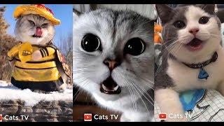 cats tv | những con mèo dễ thương nhất tik tok trung quốc #1