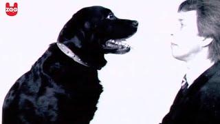 Oscar The Hypno Dog