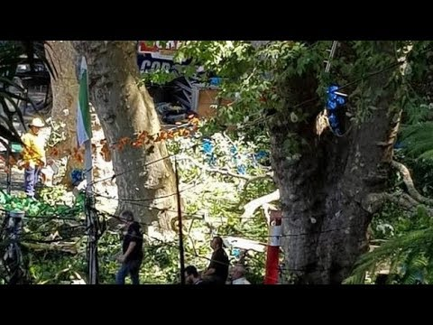 Falling tree kills at least 13, injures 49 on Portuguese island Madeira during festival