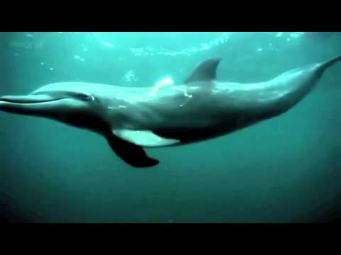 Life • Labs - The Dolphin - YouTube