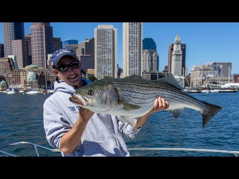 Boston Harbor Stripers (Full Episode)