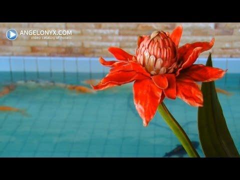 Aiyara Palace 4★ Hotel Pattaya Thailand