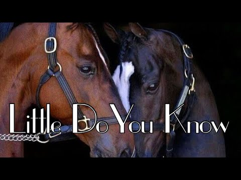 Little Do You Know    Equestrian Music Video   