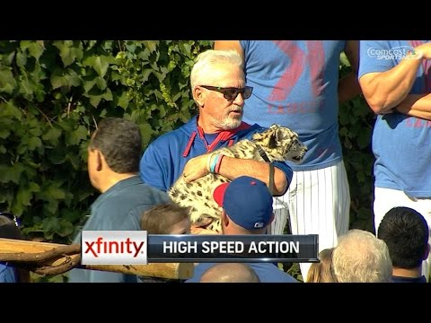 Maddon populates Friendly Confines with zoo