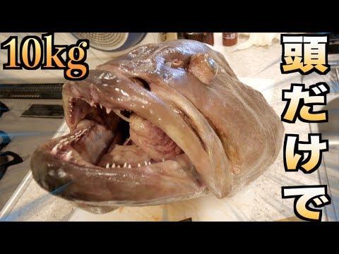【市場の闇】10kgのクエの頭を解体したら衝撃の事実が発覚!!