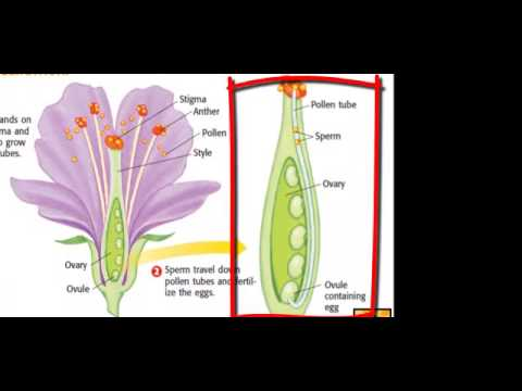Flower Reproduction Structure And Function Youtube