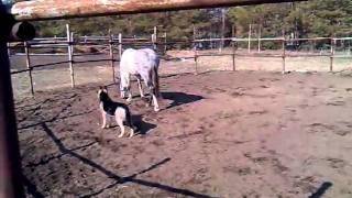 собака и конь
