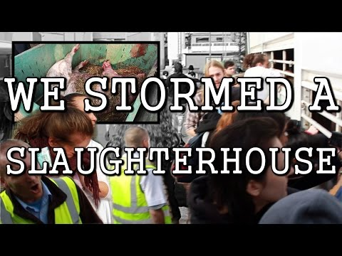 Activists storm a pig slaughterhouse (NEW FOOTAGE) // Manchester Pig Save