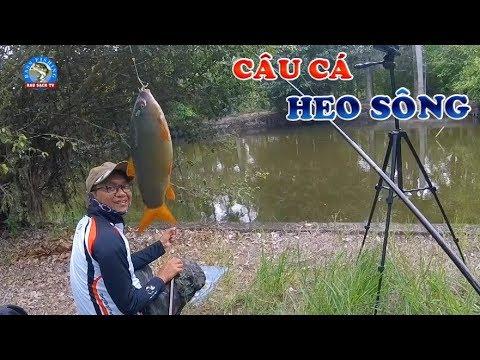 Câu Cá Giải Trí Bất Ngờ Câu Được Cá Heo Sông