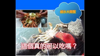 2019-10-27  鹹水大閘蟹(白底仔)  釣螃蟹 抓螃蟹