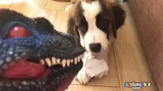 Puppies playing Dinosaur toys