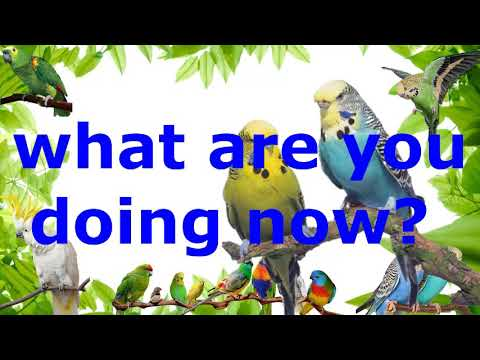 "Teach your bird to say ""what are you doing now "" child sound record parrot budgie talking training"