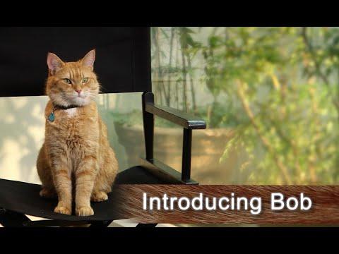 A Street Cat Named Bob - introducing the real Bob the Cat