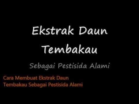 MEMBUAT EKSTRAK KULIT MANGGIS stemba berkarya from YouTube · Duration:  3 minutes 48 seconds