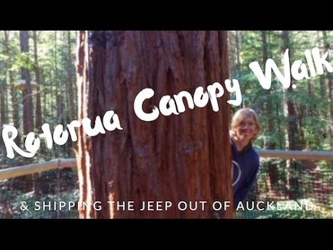 EPISODE 3 // SHIPPING JEEP BACK TO CANADA & CANOPY WALK IN ROTORUA // NEW ZEALAND