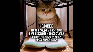 факт про кошку #Shorts #cat #tiktok #youtube #cats #ютуб #шортс