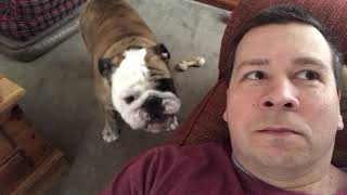 What Does A Bulldog Want After Napping?
