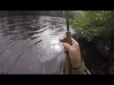 Salmon Fly Fishing On The Meadows Pool On The Welsh Dee At Llangollen