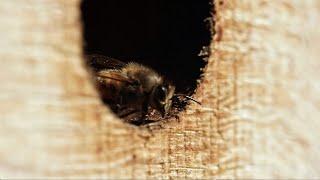 """Premier teaser du film """"Être avec les abeilles"""" sortie en 2020"""
