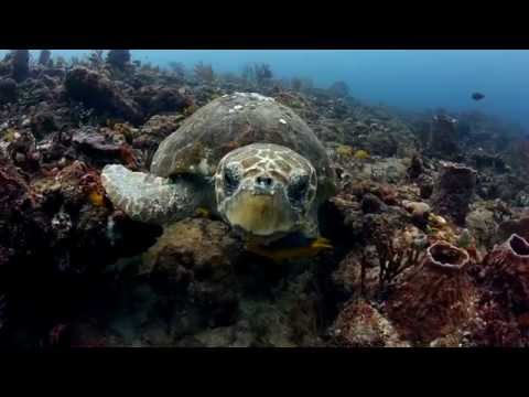My Sanctuary -  Ocean Geographic Pictures of the Year Competition 2014 Video Finalist
