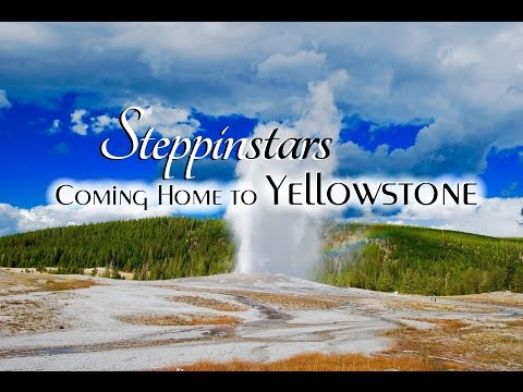 Yellowstone - Coming Home to Yellowstone - Steppinstars - Old Faithful - scenery - wildlife