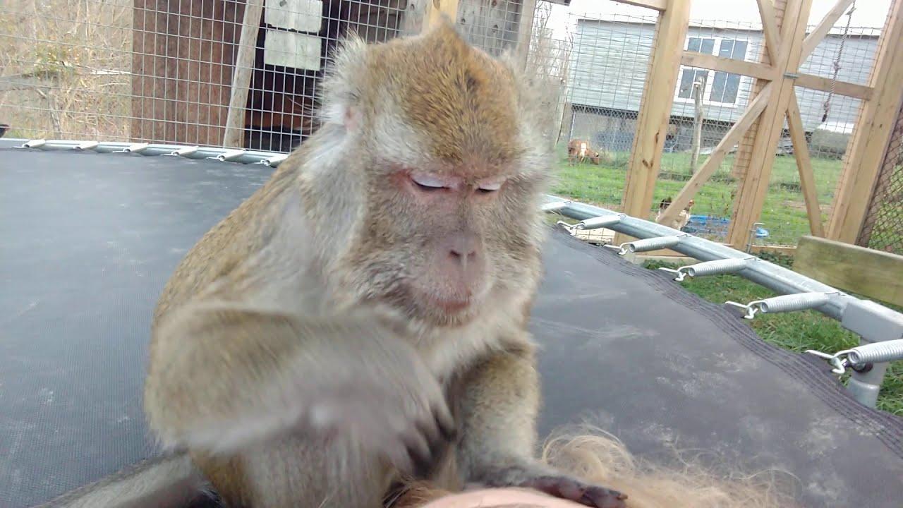 Bugs Bullock ASMR Monkey With Nature Sounds