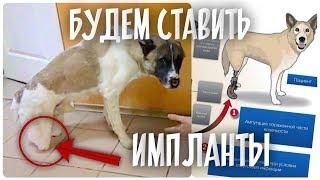 Импланты в задние лапы собаки. У щенка перелом после аварии.