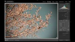 Lightroom Tutorial: How to Add a Vignette (Lens and Post-Crop)