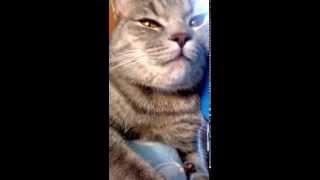 Пытаюсь усыпить кота...(, 2015-06-16T16:11:31.000Z)