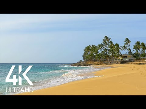 The Soothing Sounds Of Tropical Beaches With Palm Trees - Nature Soundscapes Video - Part #2