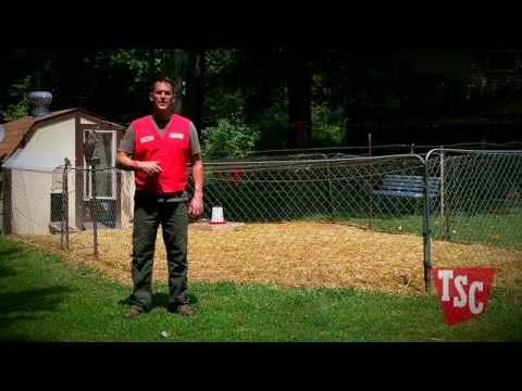 How to Prevent and Treat Coccidiosis in Chickens