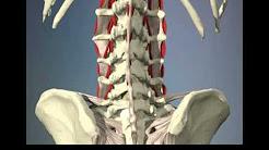 hqdefault - Mechanical Low Back Pain Journals