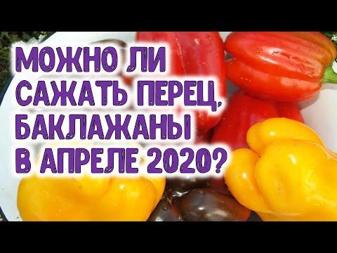Можно ли сажать перец и баклажаны в апреле 2020 года? Благоприятные дни для посадки перца и баклажан