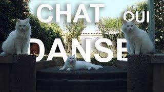 LE CHAT QUI DANSE - PAROLE DE CHAT