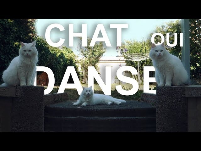 LE CHAT QUI DANSE - PAROLE DE CHAT