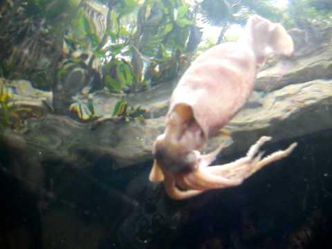 Dallas World Aquarium Shark Feeding Youtube