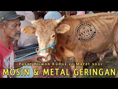 Sapi-sapi Geringan Mosin \u0026 Metal