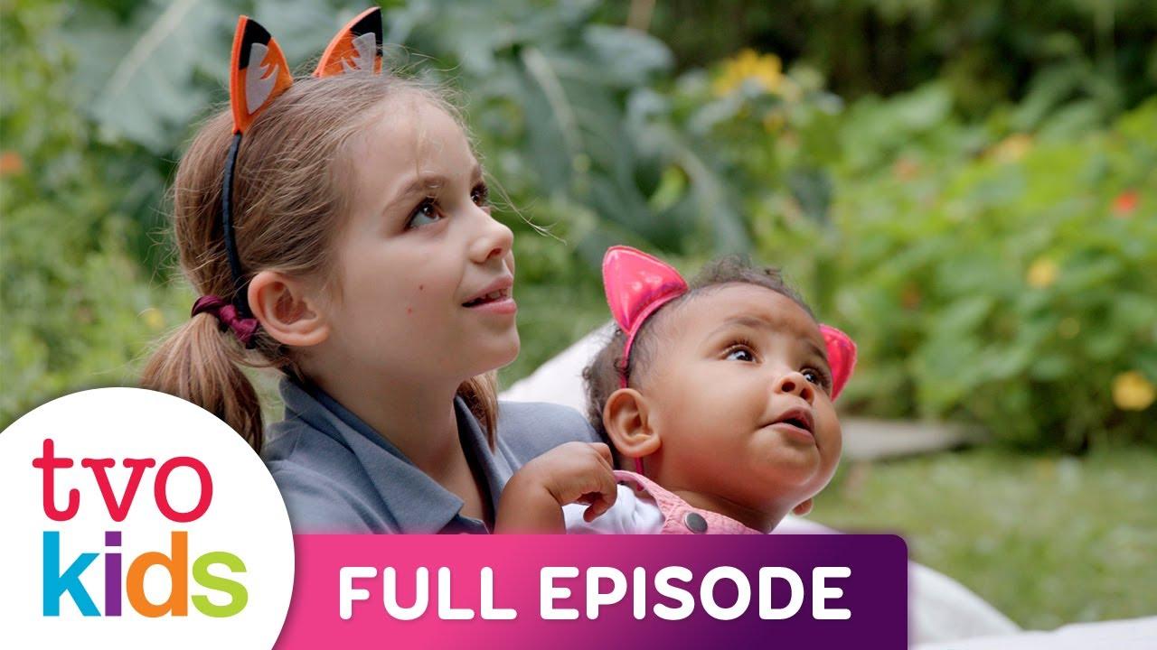 Baby Baby - Kittens - Full Episode
