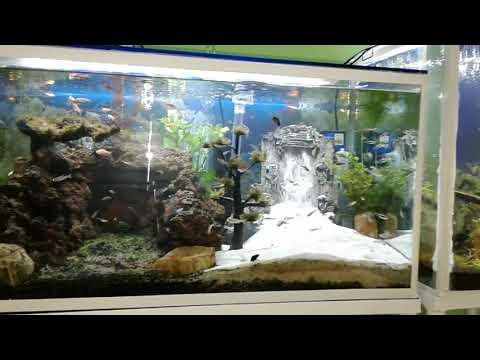 aquascape-tema-gua-batu-larvarock-dan-miniatur-air-terjun.