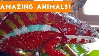 The Most Amazing Animals on Earth Compilation 2017 thumbnail
