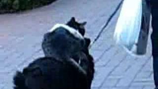 Video Amazing balancing animals - Downtown Santa Barbara download MP3, 3GP, MP4, WEBM, AVI, FLV Februari 2018