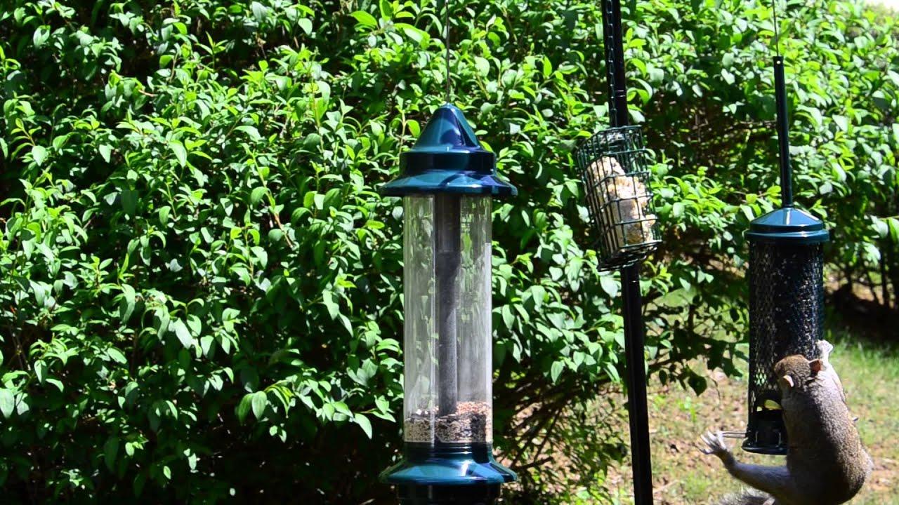 Squirrel vs Brome Squirrel Buster Mini Bird Feeder