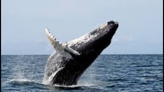 XRP Swing Traders should love whales, bearable guy, and riddlers, easy sell signals