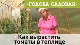 Голова садовая - Как вырастить томаты в теплице