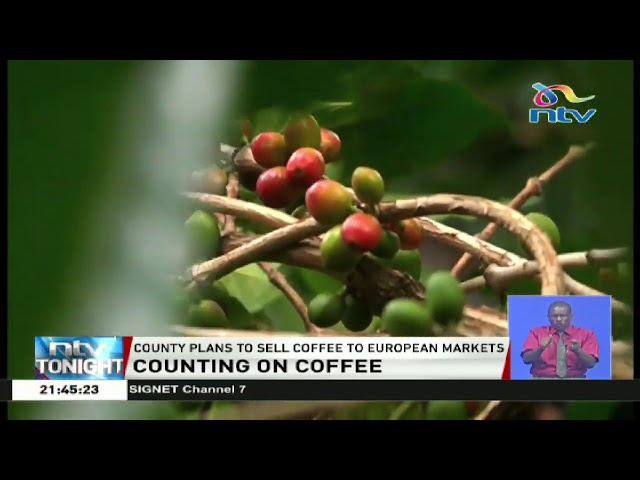 Bungoma county set to brand its own coffee