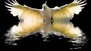 Ready To Spread Your Wings - John Miles ( HQ ) + Lyrics