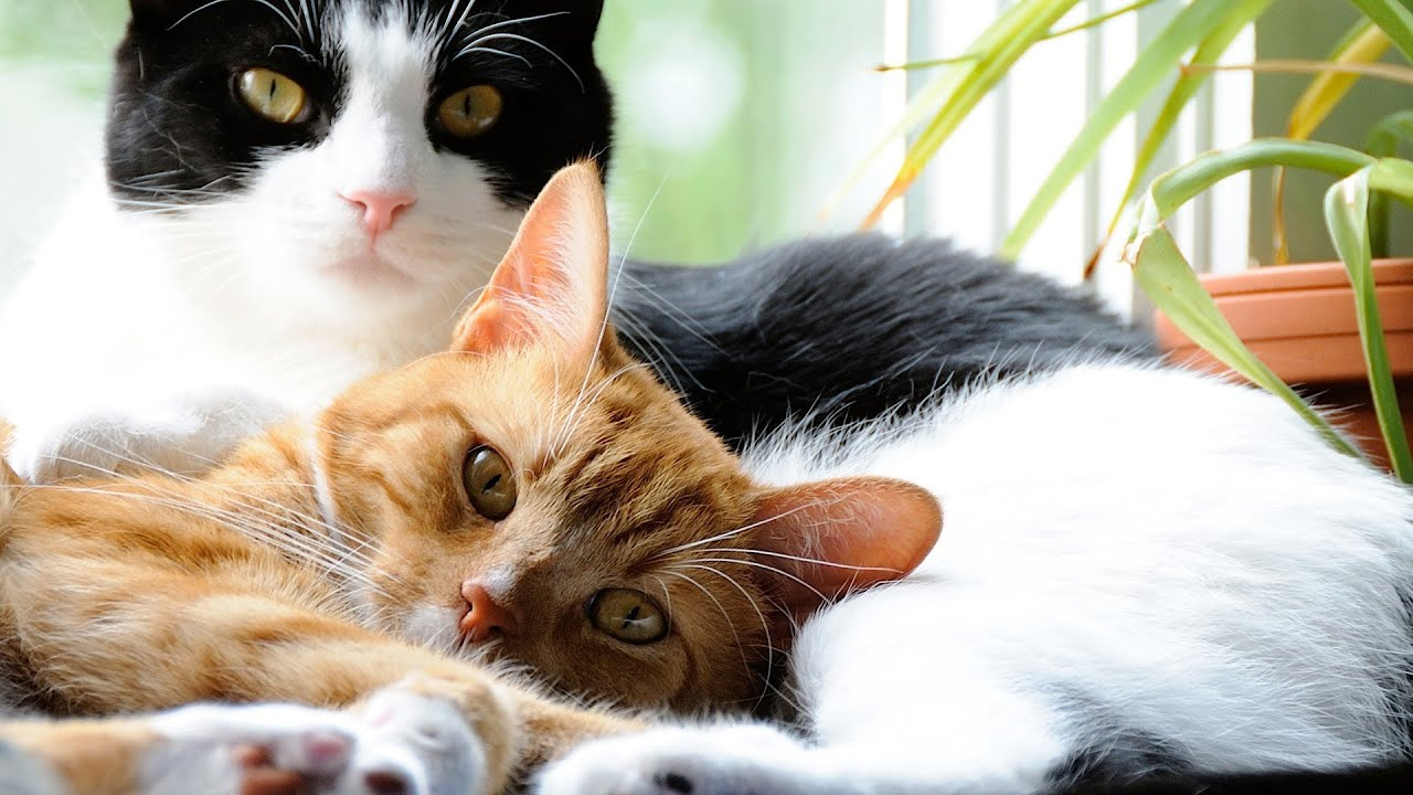Recognizing signs of stress in a cat
