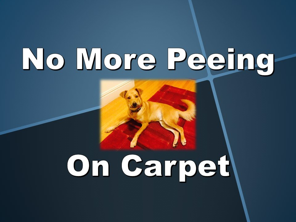 Peeing on the carpet thought differently