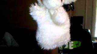 Puppet goes wild to @Bleszt club music lmfao high moments